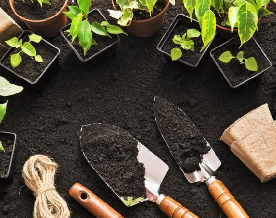 Gardening tools and plants on land
